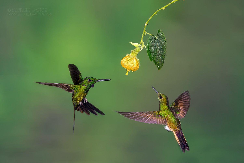 Tropical Photo tours- Best Ecuador bird photo tours
