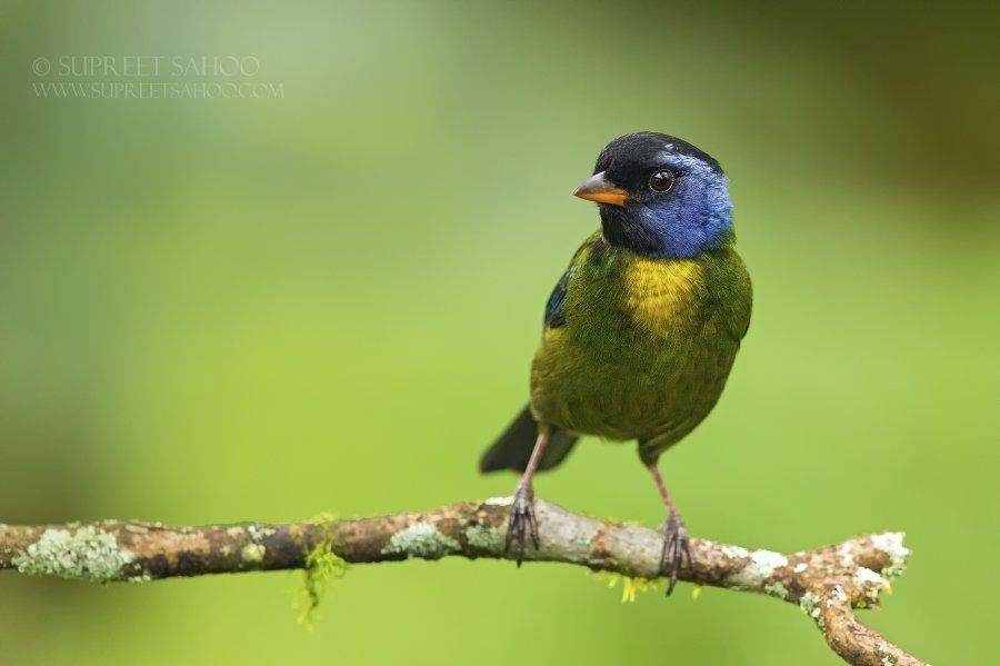 Ecuador birding Tour