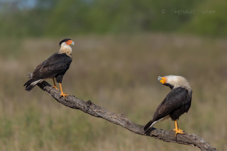 texas bird photo tours