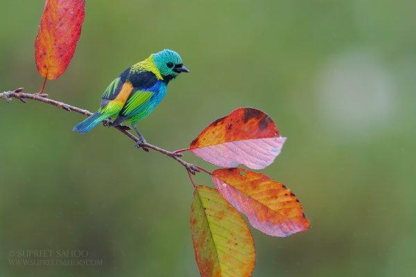 Tropical Photo tours- Best Bird photography tour
