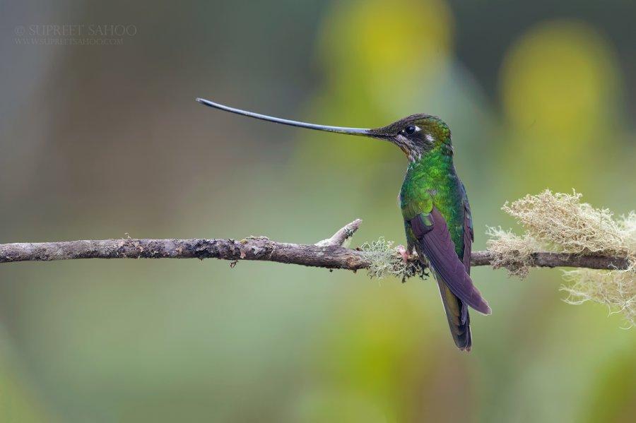 Tropical Photo tours- Colombia bird photo tours