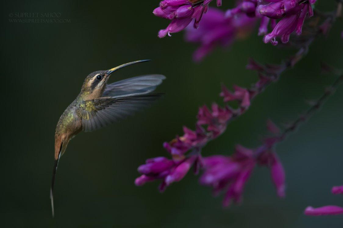 Tropical Photo tours- Brazil bird photo tours