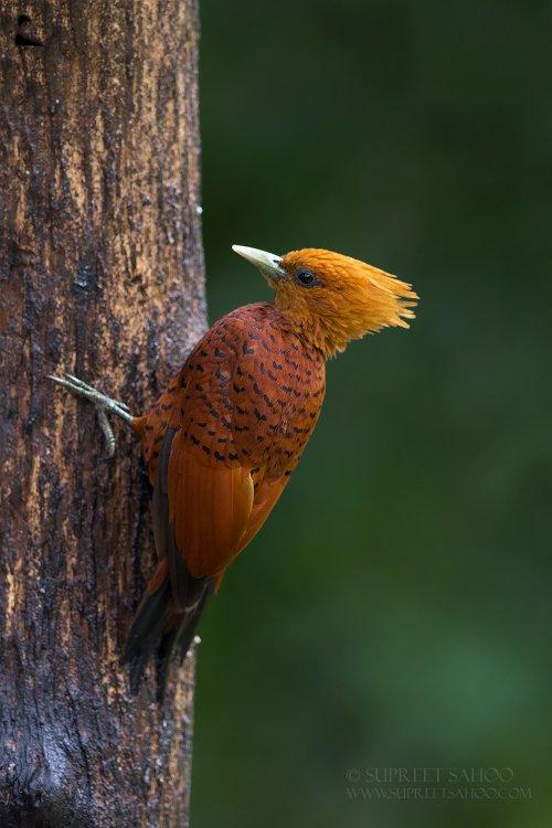 Tropical Photo tours- Best Costa Rica bird photo tours