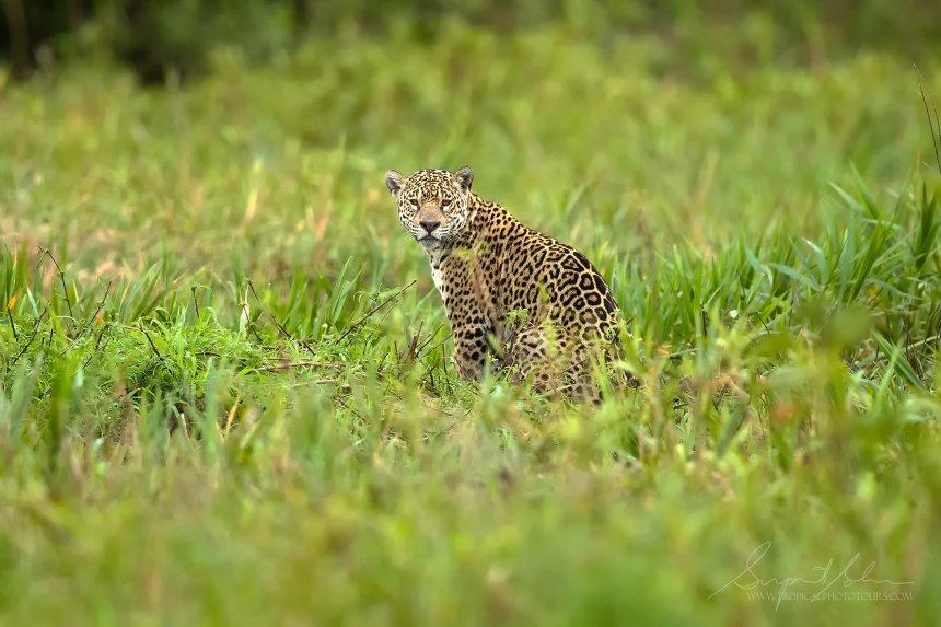 _B4I6998_brazil_north_Pantanal