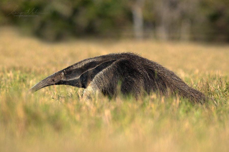Brazil Jaguar Photo Tour