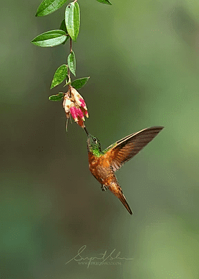 Tropical Photo tours- Best Ecuador Herping Tour