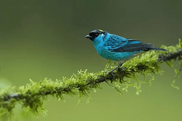 Tropical Photo tours- Best Colombia bird photo tours