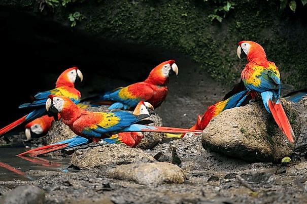 Tropical Photo tours- Ecuador Herping Tour
