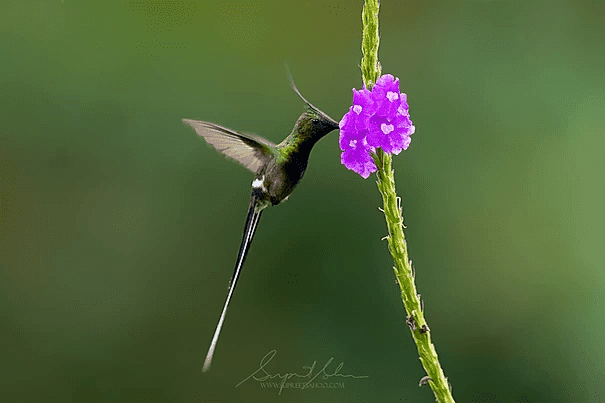 Tropical Photo tours- Peru photo tours