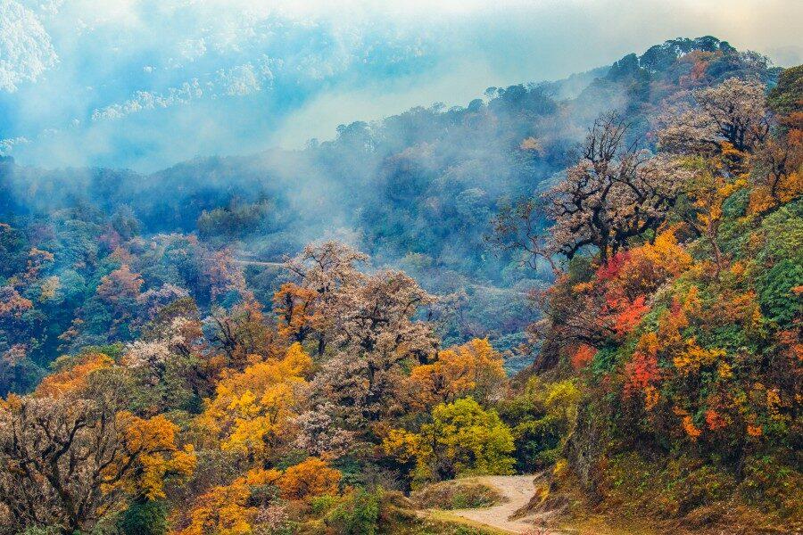 Copy of Copy of Singalila Autumn colours_