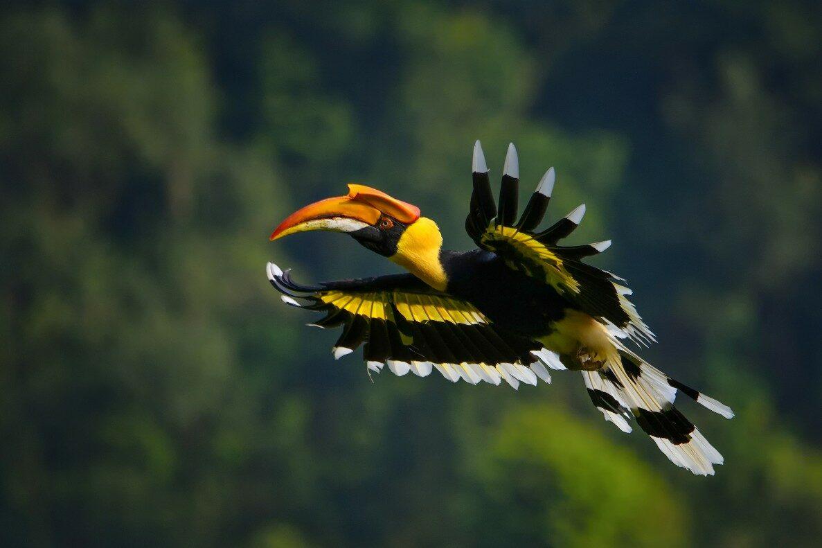 Tropical Photo tours- Bird photography tour