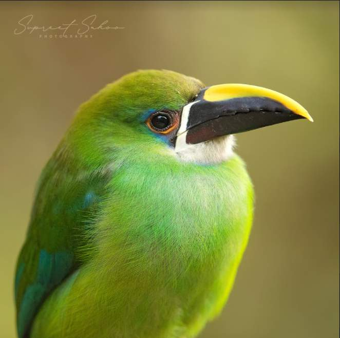 Top spots to Birdwatch with Tropical Photo Tours in Colombia