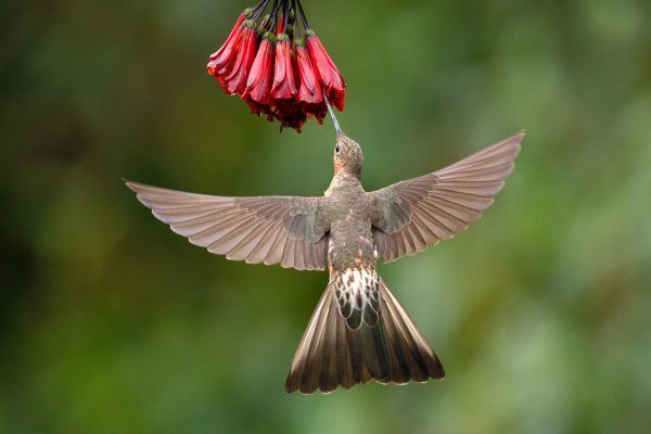 Which place is best for bird photography