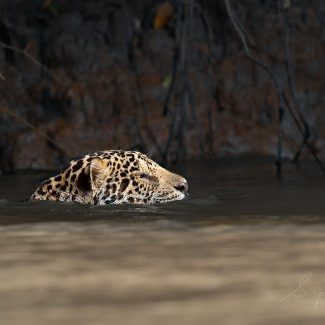 Brazil Pantanal Trip report_compressed25