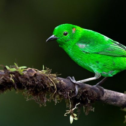Tropical Photo tours- Ecuador bird photo tours
