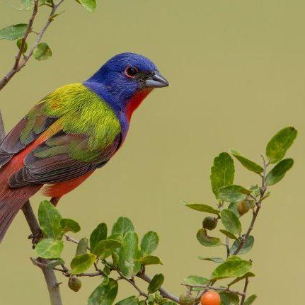Tropical Photo tours- Texas bird photo tours